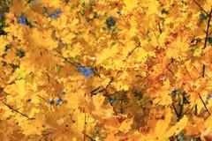 Цветы осени Деревья осенью Желтое листво Красота осени стоковые изображения rf