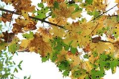 Цветы осени Деревья осенью Желтое листво Красота осени стоковая фотография