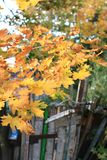 Цветы осени Деревья осенью Желтое листво Красота осени стоковые изображения