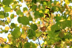 Цветы осени Деревья осенью Желтое листво Красота осени стоковые фото