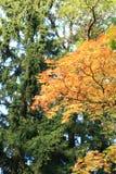 Цветы осени Деревья осенью Желтое листво Красота осени стоковое изображение