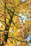 Цветы осени Деревья осенью Желтое листво Красота осени стоковое фото rf