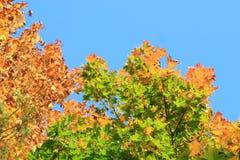 Цветы осени Деревья осенью Желтое листво Красота осени стоковое изображение rf