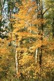 Цветы осени Деревья осенью Желтое листво Красота осени стоковая фотография rf