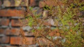 Цветы осени Для предпосылки стоковое фото rf