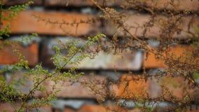 Цветы осени Для предпосылки стоковая фотография rf