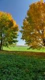 Цветы осени Измените цвет листьев дерева стоковое фото rf