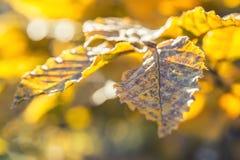 Цветы осени Листья осени в цветах и светах осени падение стоковое изображение rf