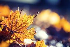 Цветы осени Листья осени в цветах и светах осени стоковое изображение