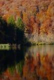 Цветы осени на озерах Plitvice стоковое фото