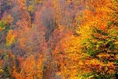 Цветы осени Типичный сельский ландшафт в равнинах Трансильвании, Румынии стоковая фотография
