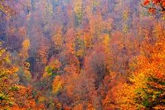 Цветы осени Типичный сельский ландшафт в равнинах Трансильвании, Румынии стоковая фотография rf