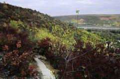 Цветы осени Шикарная прогулка в парке стоковая фотография