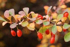 Цветы осени Стоковая Фотография
