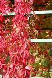 цветы осени Стоковое Изображение