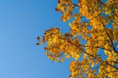 Цветы осени стоковая фотография rf