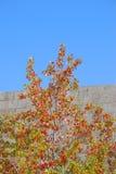 цветы осени Стоковое Фото