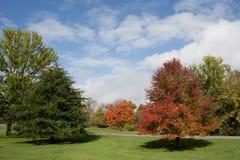 Цветы осени Стоковые Фото