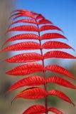 цветы осени Стоковые Изображения