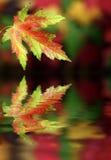 цветы осени Стоковое фото RF