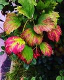 Цветы осени Стоковое Изображение RF