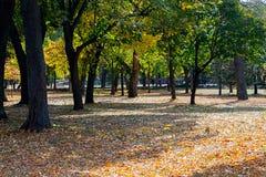 Цветы падения в парке стоковые изображения rf