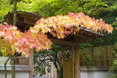 Цветы падения на японском саде стоковые изображения