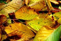 Цветы падения стоковое фото rf
