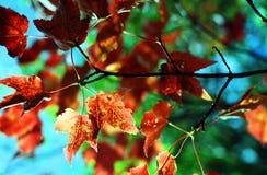 Цветы падения Стоковые Изображения RF