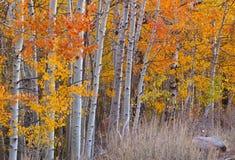 Цветы падения Стоковое Фото