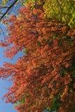 Цветы падения стоковое изображение