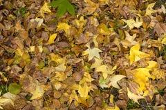 Цветы падения Стоковая Фотография RF