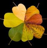 цветы понижаются листья Стоковая Фотография