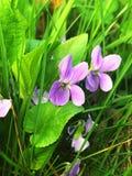 Цветы природы стоковые фотографии rf