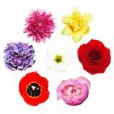 Цветы Яркий красочный комплект цветков Стоковое Фото