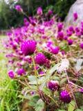 Цветы стоковые изображения rf