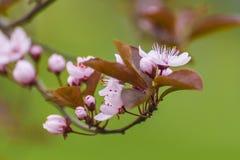 Цветы Стоковое Изображение RF