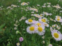 Цветы Стоковые Изображения