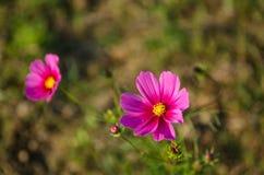 Цветы Стоковое Фото