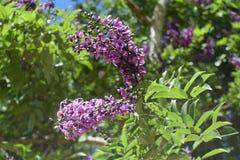 Цветы Стоковые Фото