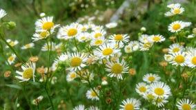 Цветы Стоковое фото RF