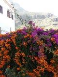 Цветы Стоковая Фотография RF