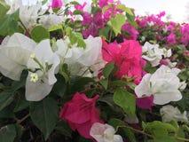 Цветы Стоковые Фотографии RF