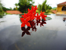 Цветы Стоковая Фотография