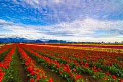 цветы galore Стоковое Изображение