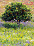 цветы galore Стоковое фото RF