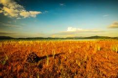цветы landscape красный заход солнца живой Стоковые Изображения RF