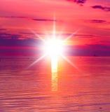 цветы landscape красный заход солнца живой Стоковая Фотография