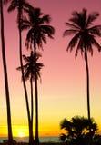 цветы landscape красный заход солнца живой Стоковое Фото