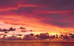 цветы landscape красный заход солнца живой Стоковая Фотография RF